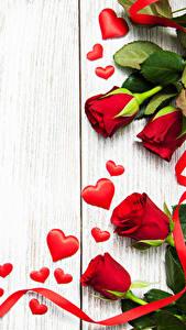 Фотография День святого Валентина Розы Доски Красный Сердечко Ленточка цветок