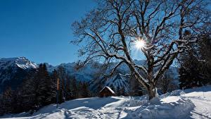 Фото Швейцария Зимние Здания Горы Снег Деревья Лучи света Альпы Braunwald