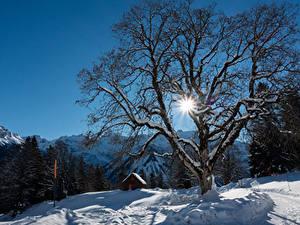 Фото Швейцария Зимние Дома Горы Снеге Дерева Лучи света Альп Braunwald