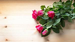 Обои Розы Доски Красная Цветы