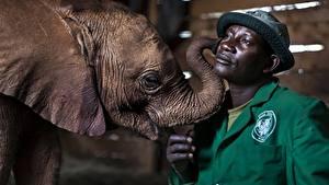 Картинка Слоны Детеныши Мужчины Негр Шляпа Животные