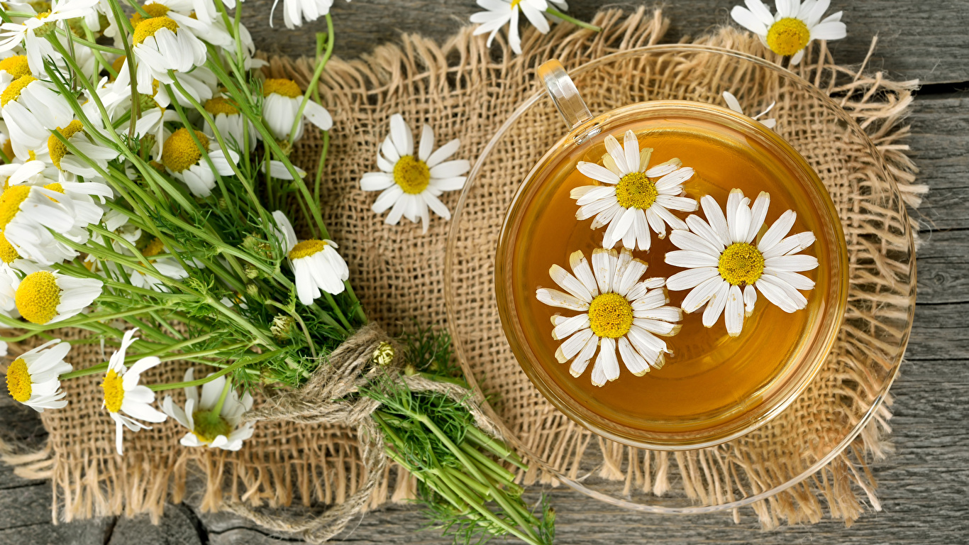 Фотография Чай Ромашки чашке Продукты питания 1366x768 ромашка Еда Пища Чашка