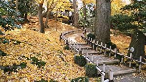 Фотографии Япония Сады Парки Осенние Листва Деревья Тропинка Kenrokuen Garden, Kanazawa Природа