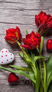Обои День святого Валентина Тюльпаны Доски Красных Сердце цветок