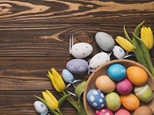 Фотографии Тюльпан Пасха Доски Яйцами Разноцветные Цветы