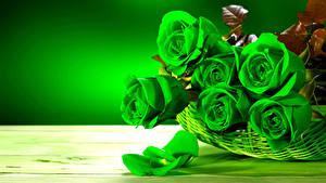 Фотография Розы Вблизи Зеленые Лепестков Цветы