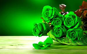 Фотография Розы Вблизи Зеленый Лепестки Цветы