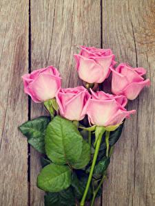 Картинка Роза Доски Розовые Цветы