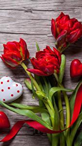 Фотографии День всех влюблённых Тюльпаны Сердце Красный цветок