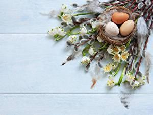 Картинки Пасха Яйца Ветки Гнездо verba
