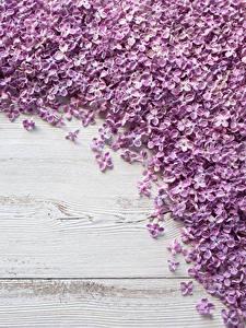 Картинки Сирень Доски Лепестки цветок