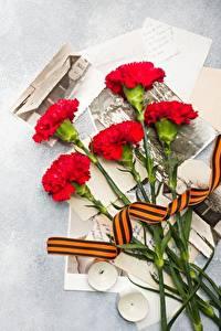 Обои для рабочего стола 9 мая Гвоздики цветок