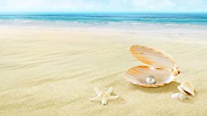 Фотография Жемчуг Ракушки Море Пляжа Песок Размытый фон Природа