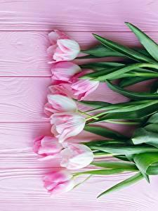 Обои Тюльпан Розовая Доски Цветы