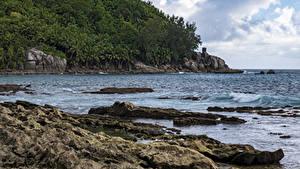 Обои Тропики Берег Леса Скала Petite Police Beach Seychelles
