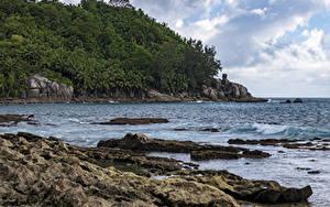 Обои Тропики Берег Леса Скала Petite Police Beach Seychelles Природа