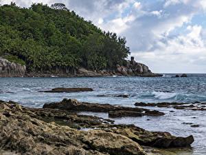 Обои Тропический Берег Леса Скала Petite Police Beach Seychelles