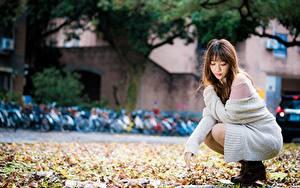 Фото Азиаты Размытый фон Сидит Лист Шатенка молодые женщины