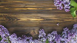 Фото Сирень Доски На ветке Цветы