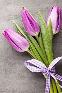Фотография Тюльпаны Трое 3 Бантики Цветы