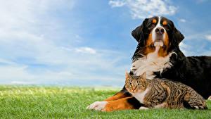 Фотография Собака Кошка Двое Траве животное