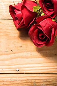 Фотография Розы Вблизи Доски Красный Цветы