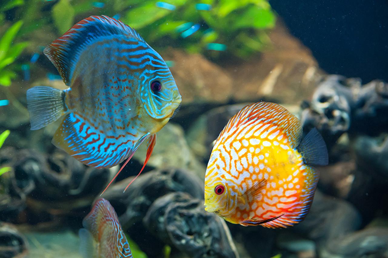 Обои для рабочего стола Рыбы Подводный мир два животное 2 две Двое вдвоем Животные