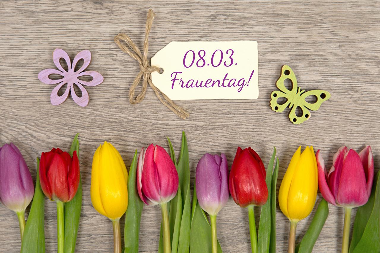 Фотография 8 марта Бабочки Немецкий Разноцветные Тюльпаны Цветы Доски Международный женский день