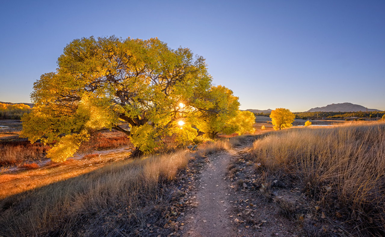 Картинки США Prescott, Arizona Тропа Солнце Природа Вечер дерево штаты америка тропы солнца тропинка дерева Деревья деревьев