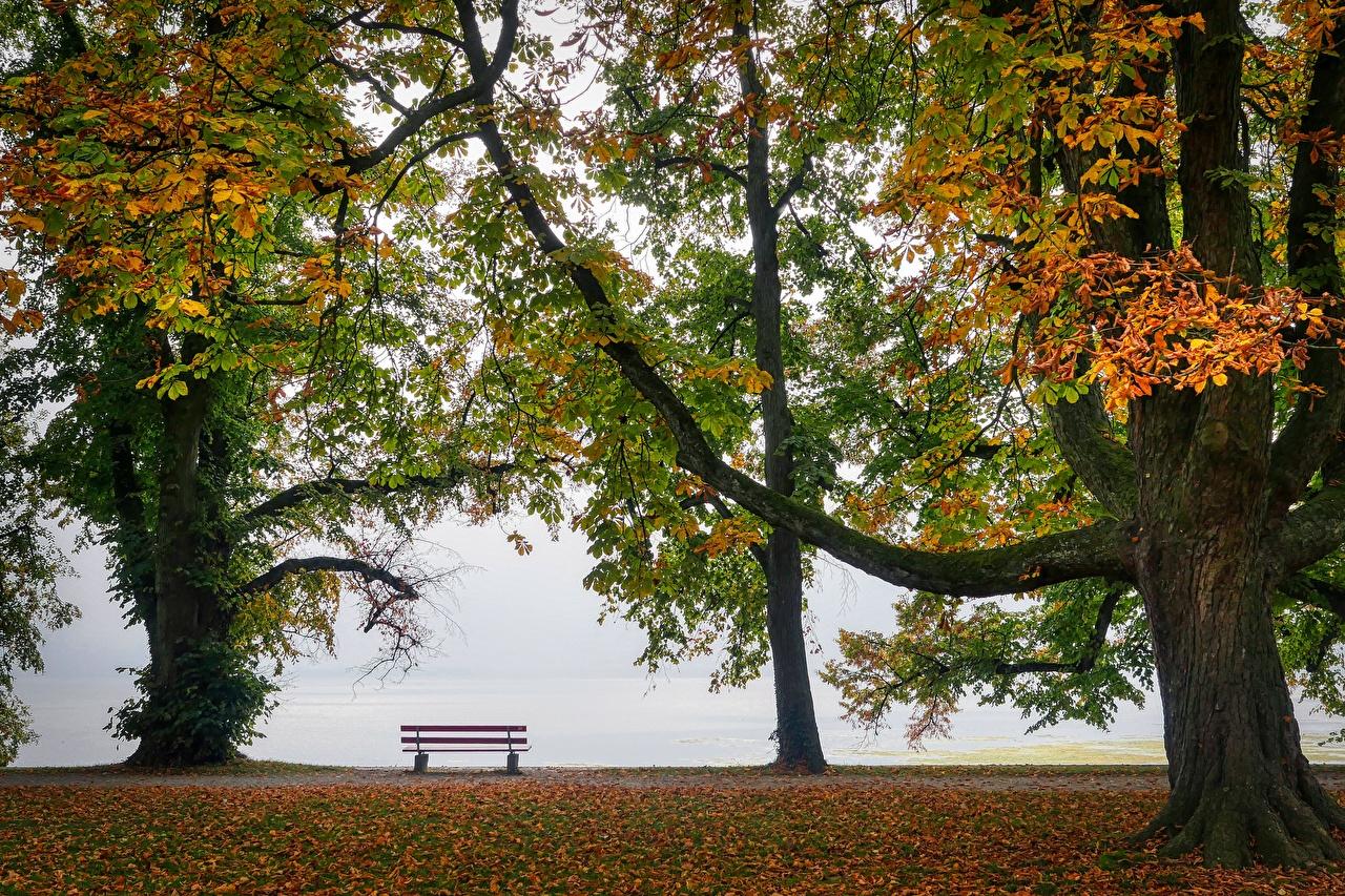 Фотография Природа осенние Парки Скамья Деревья Осень Скамейка