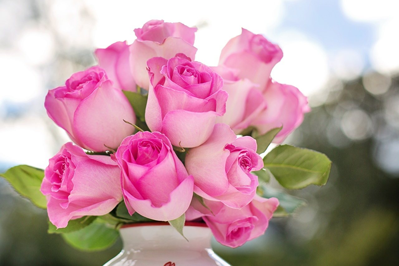 Обои для рабочего стола Розы розовая Цветы вблизи роза розовых Розовый розовые цветок Крупным планом