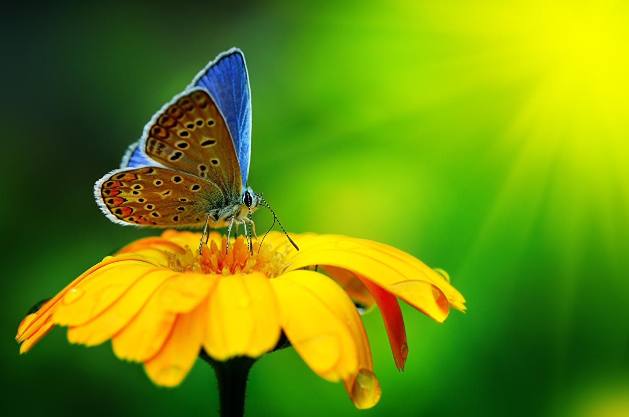 Картинка бабочка насекомое животное Бабочки Насекомые Животные