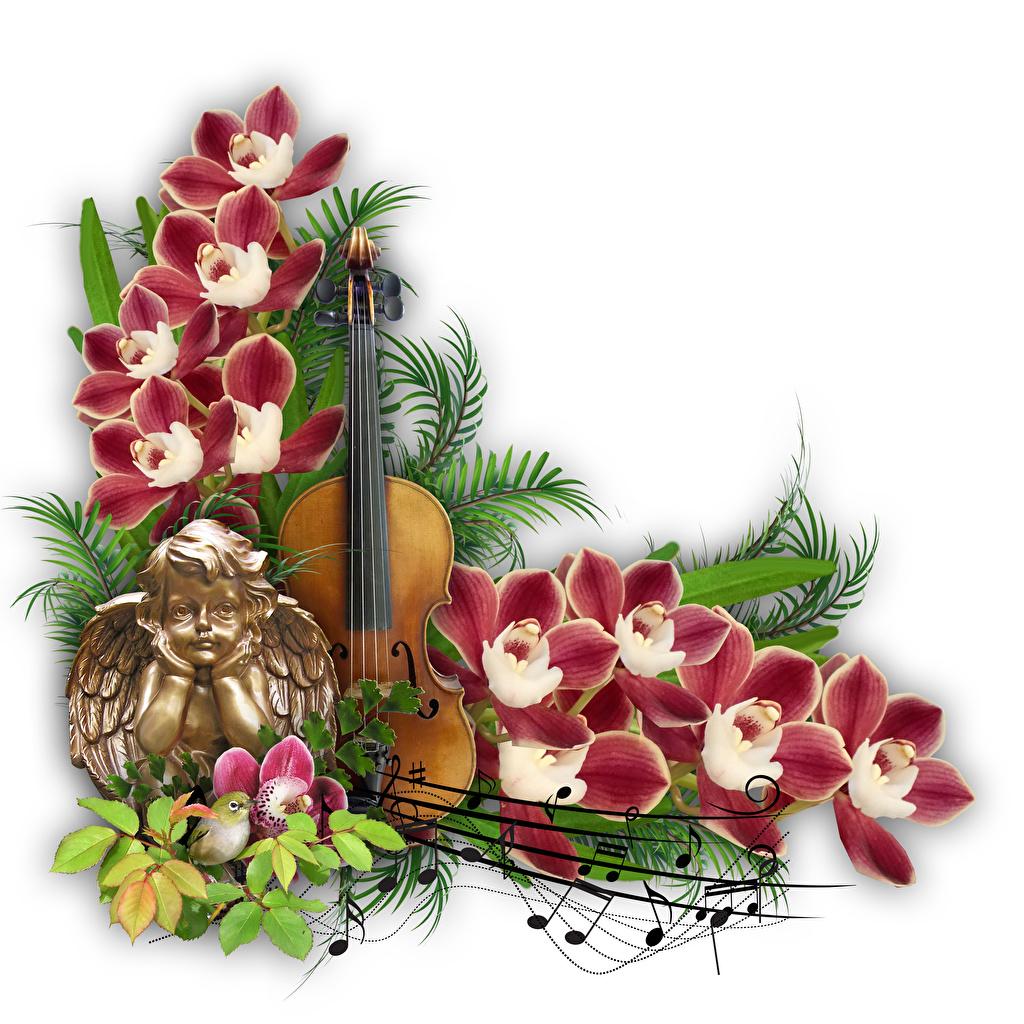 Обои для рабочего стола Скрипки Ноты Орхидеи ангел Цветы ветка белом фоне скрипка орхидея Ангелы цветок ветвь Ветки на ветке Белый фон белым фоном