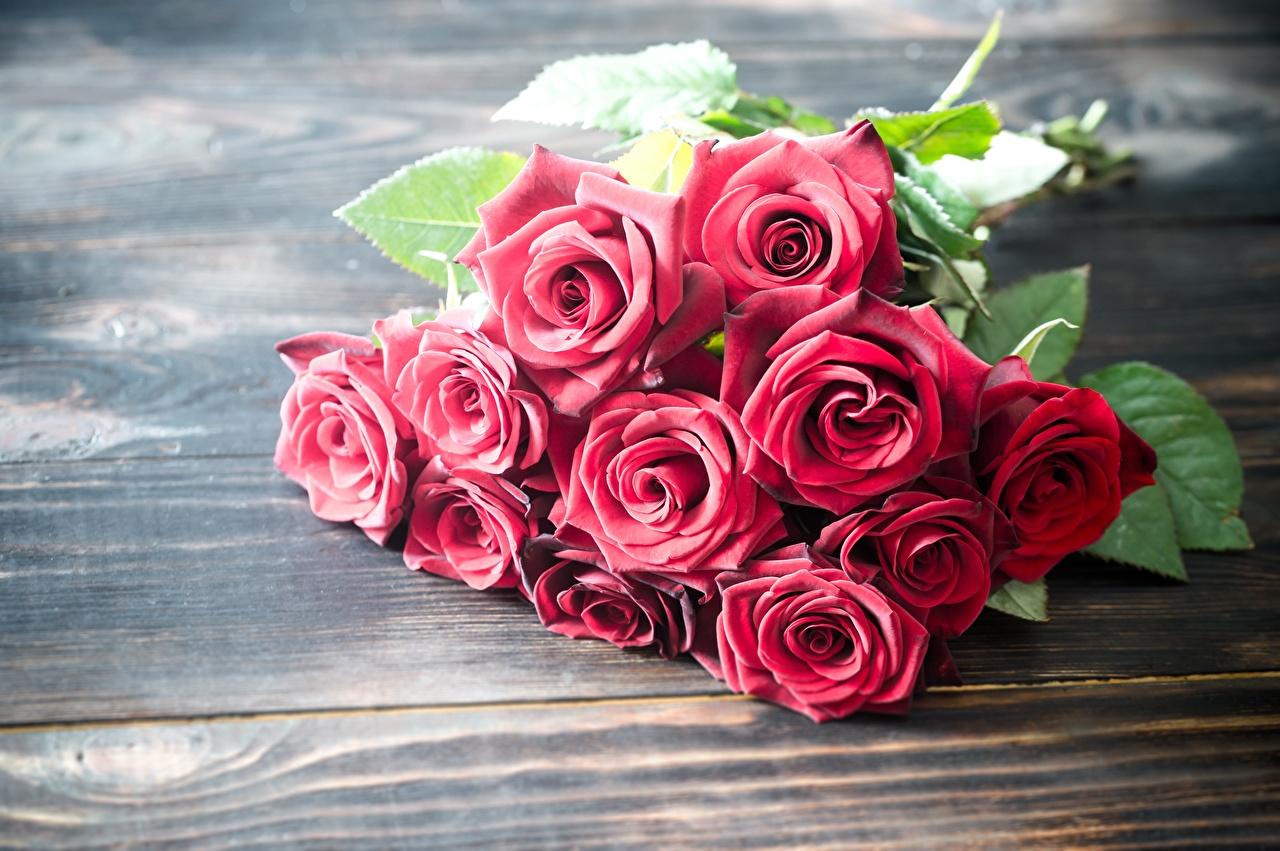 Фото Букеты роза красная Цветы Доски букет Розы Красный красные красных цветок