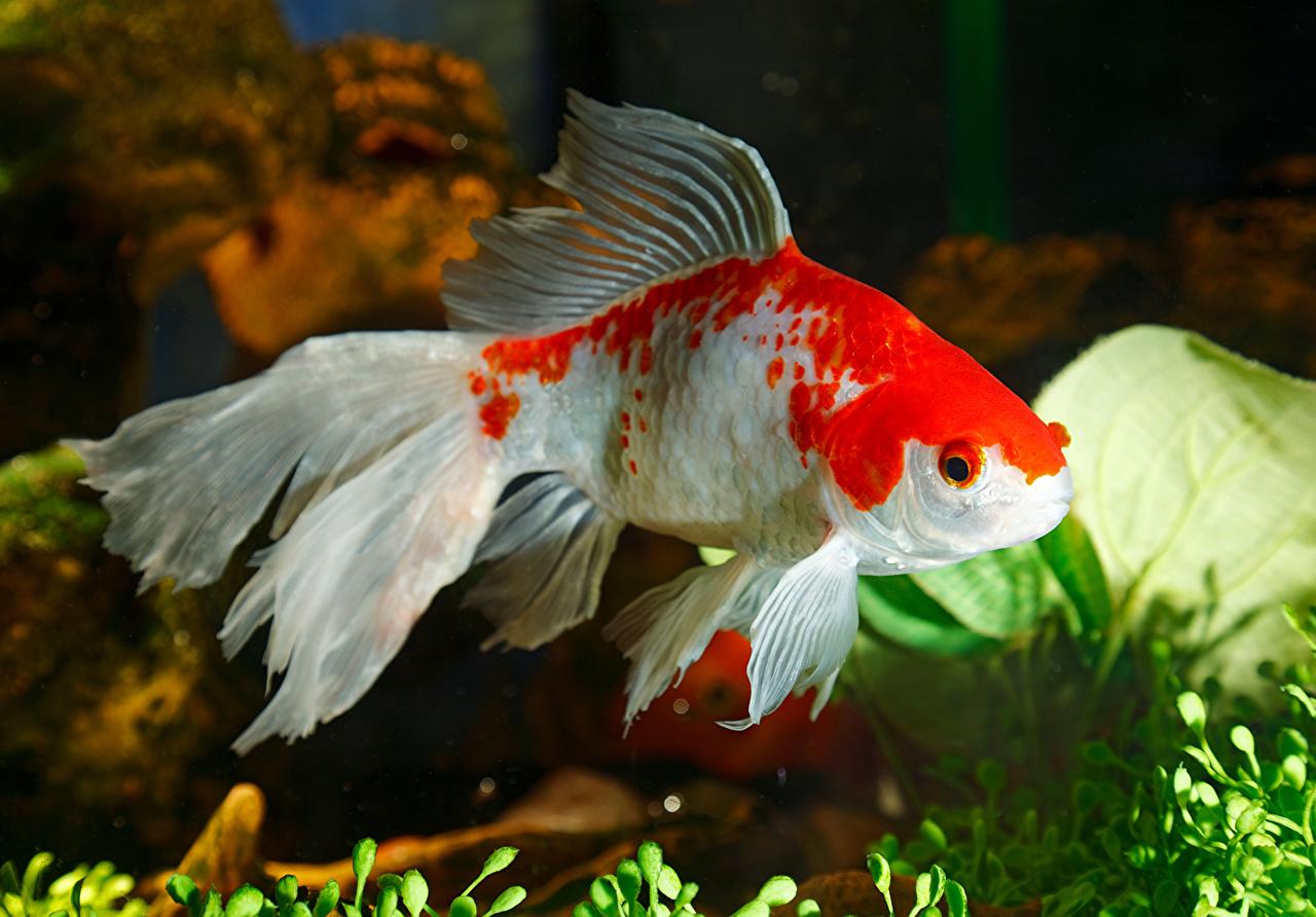 Фото Рыбы животное Животные