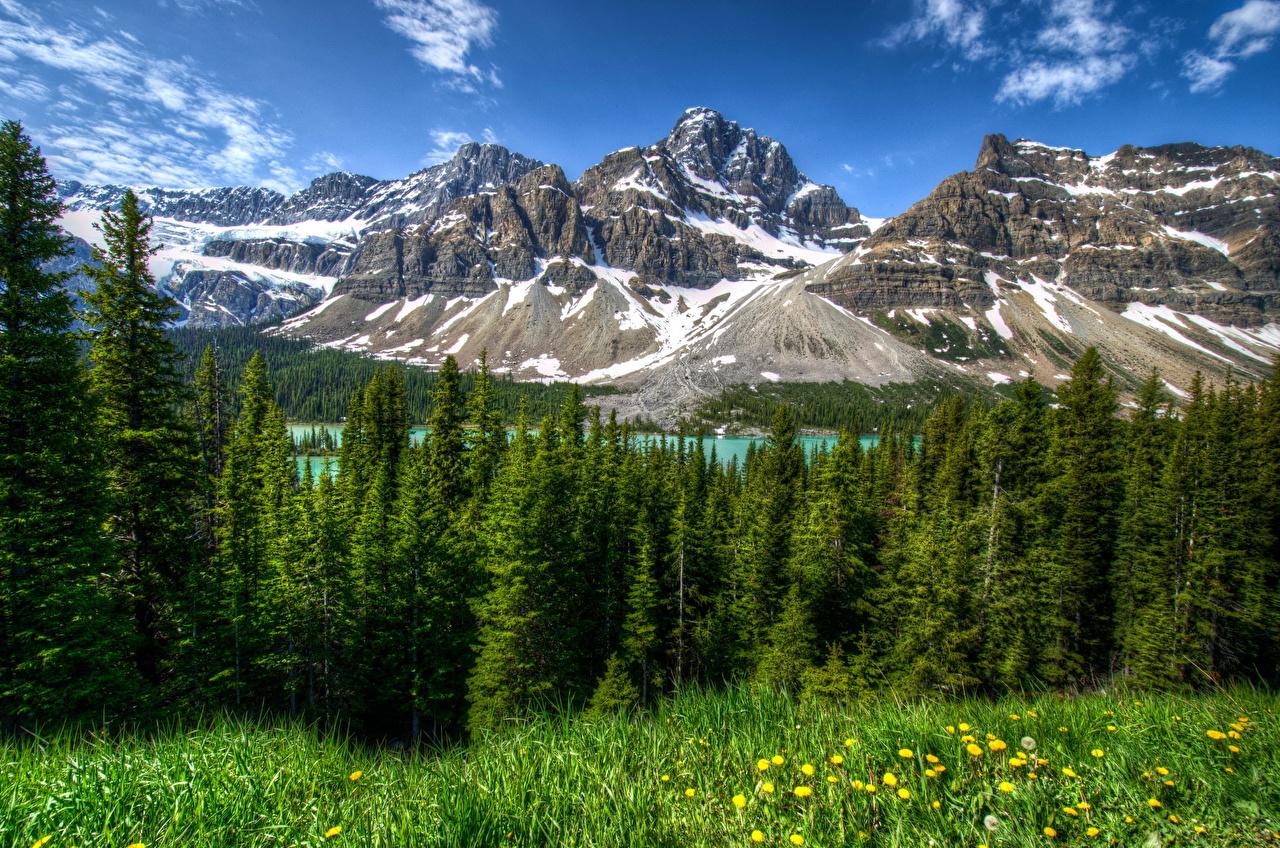 Фотографии Банф Канада HDRI Горы Природа Леса Парки Пейзаж Трава дерево HDR гора лес парк траве дерева Деревья деревьев