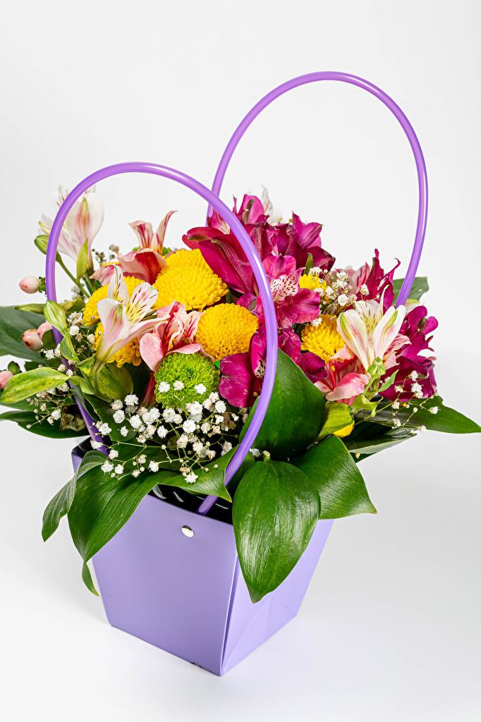 Картинки букет цветок Корзинка Хризантемы Альстрёмерия Белый фон  для мобильного телефона Букеты Цветы корзины Корзина белом фоне белым фоном