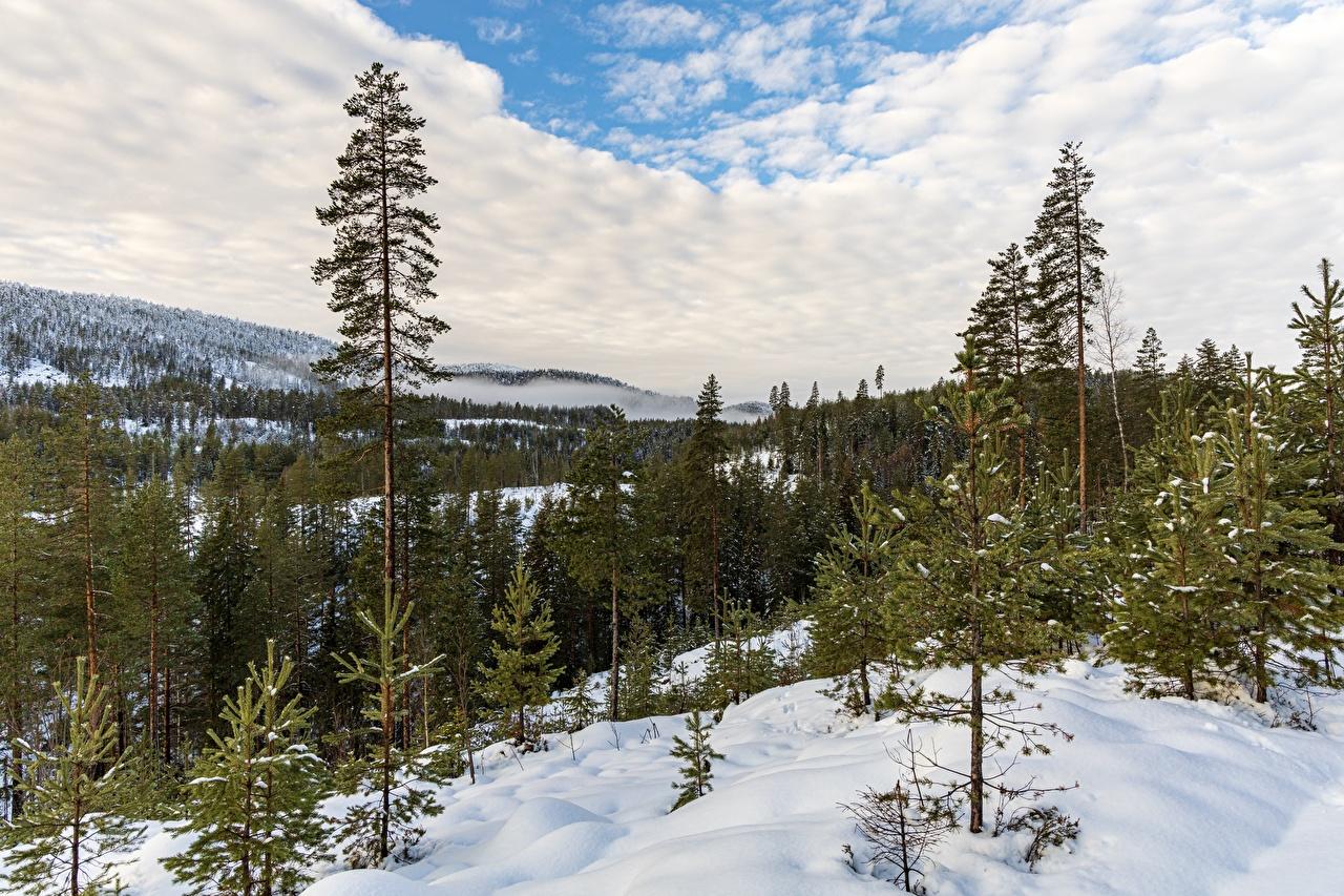 Фотографии Норвегия Kongsberg Природа лес снега дерево облачно Леса Снег снегу снеге Облака облако дерева Деревья деревьев