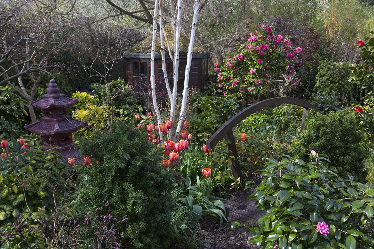 Фотографии Walsall Garden Природа Тюльпаны Сады Рододендрон Кусты