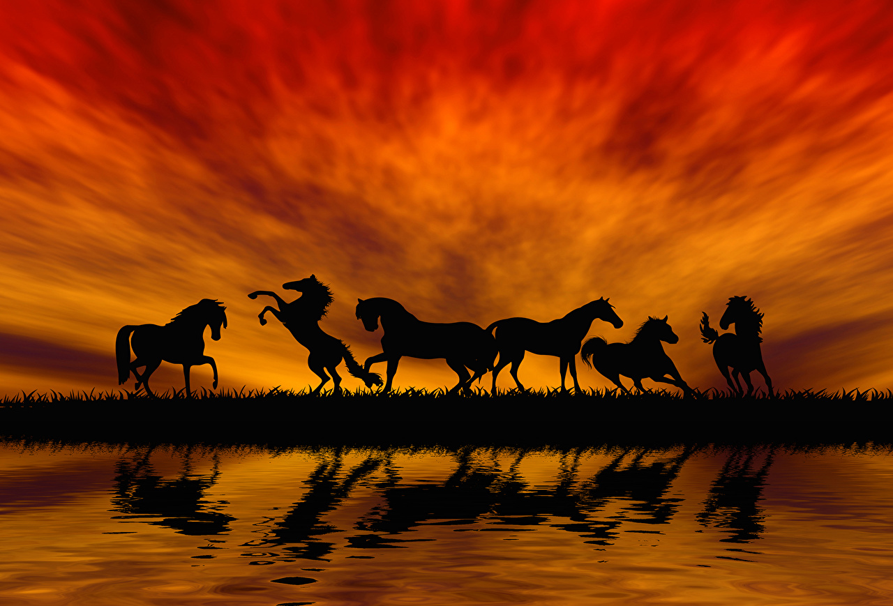 Картинка лошадь Силуэт Прыжок Рассветы и закаты животное Лошади силуэты силуэта прыгать прыгает в прыжке рассвет и закат Животные