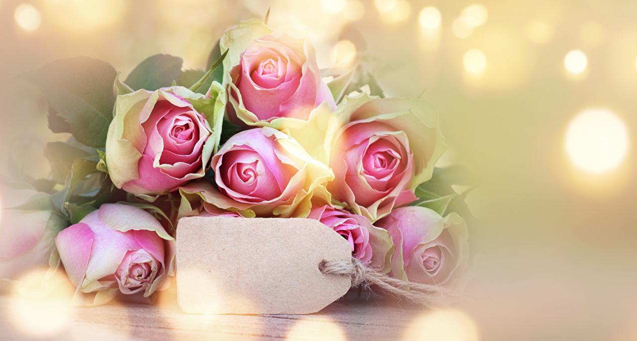 Фотография Розы Цветы Шаблон поздравительной открытки Крупным планом вблизи