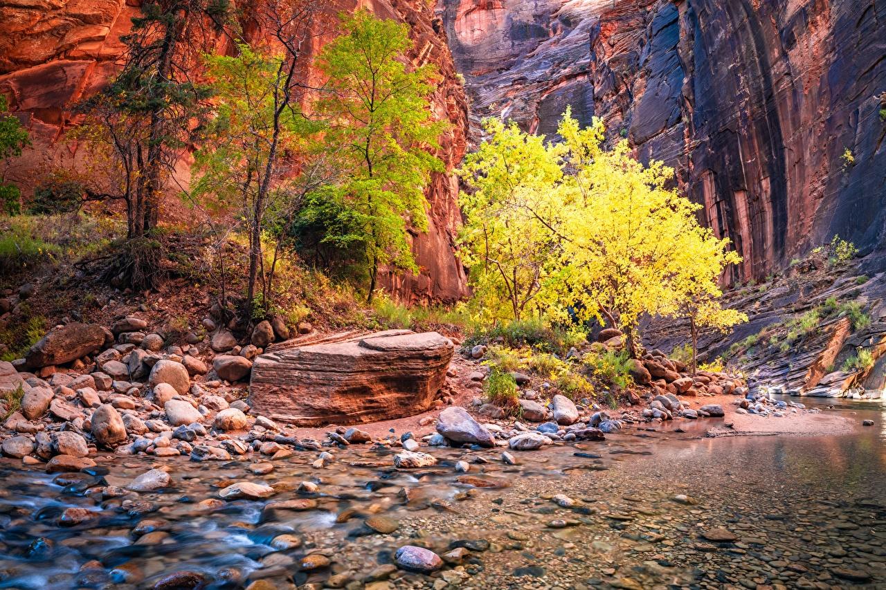Обои для рабочего стола Зайон национальнай парк америка Utah Скала ручеек Каньон Природа Камни США штаты Утес Ручей скалы скале каньоны каньона Камень