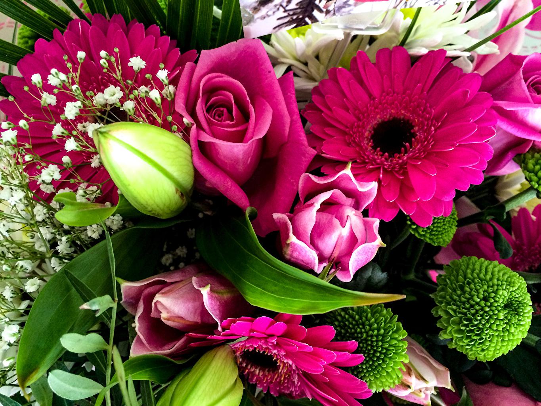 Фотография букет Розы Герберы цветок Букеты роза гербера Цветы