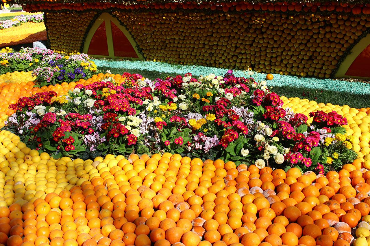 Фото Франция Lemon Festival Menton Апельсин Лютик Парки цветок Первоцвет дизайна парк Цветы Примула Дизайн