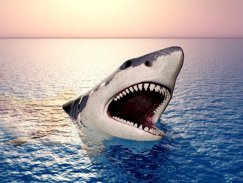 Фотографии Акулы 3д Океан Животные 3D Графика животное