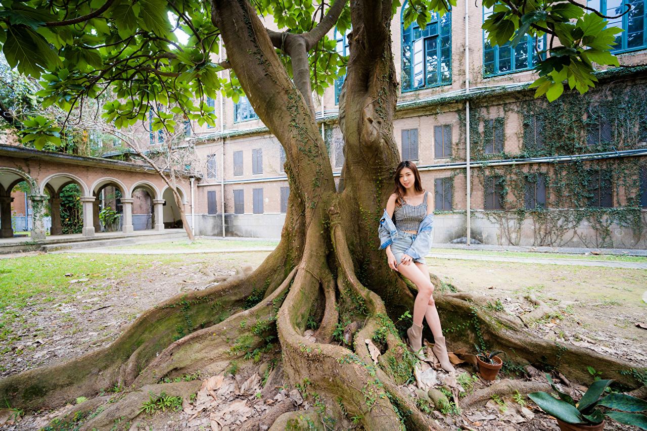 Фотография Поза молодая женщина Ноги азиатка дерева смотрят позирует девушка Девушки молодые женщины ног Азиаты азиатки дерево Взгляд Деревья смотрит деревьев