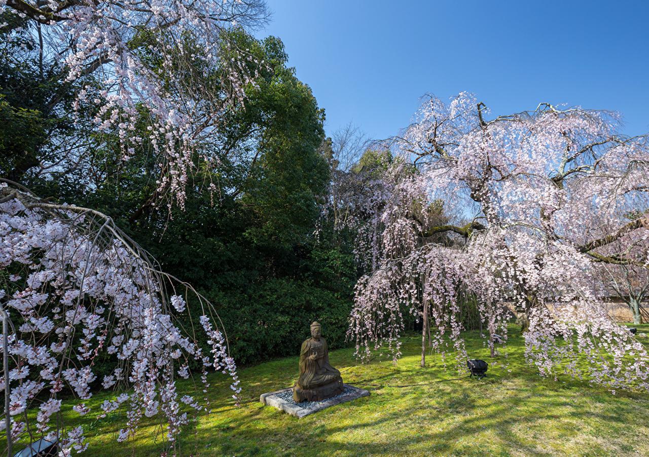 Обои для рабочего стола Будда Природа весенние парк Скульптуры Цветущие деревья будды Весна Парки