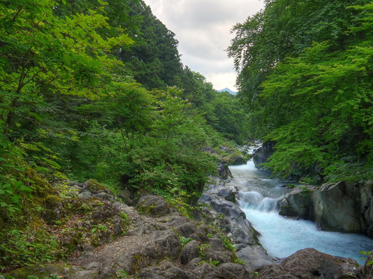 Картинка Япония Nikko  Природа лес Реки Леса река речка