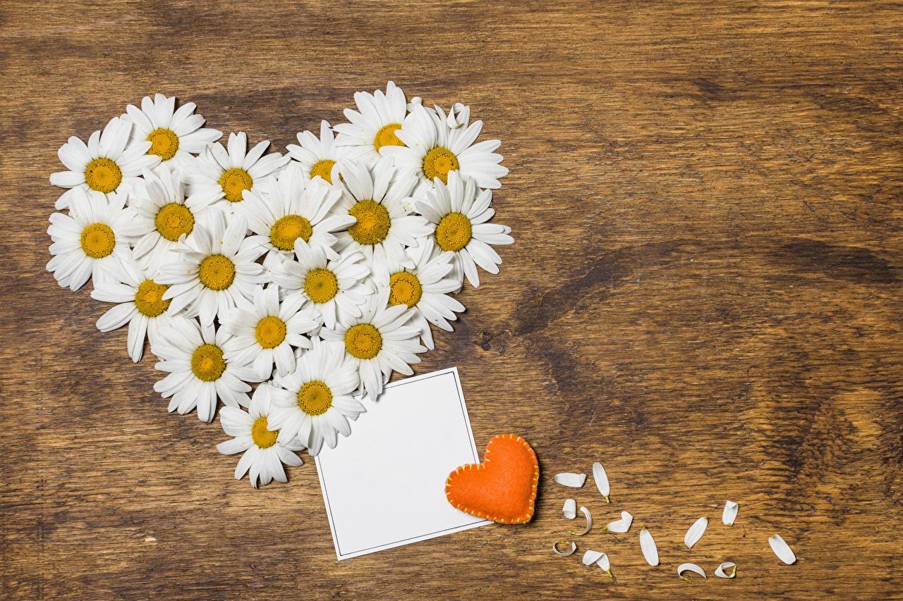 Фотографии День всех влюблённых сердечко Цветы Ромашки День святого Валентина серце Сердце сердца цветок ромашка