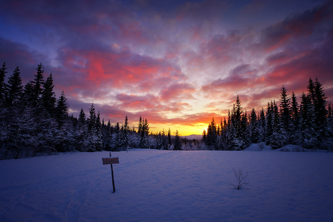 Фотография Зима Природа Небо Леса снегу рассвет и закат зимние лес Снег снега снеге Рассветы и закаты